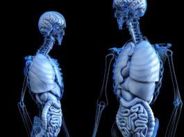 microbiota intestinale e ossa
